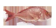 Φαγκρί | Lovefish
