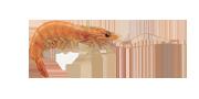 Γαρίδες | Lovefish