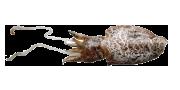 Σουπιά | Lovefish