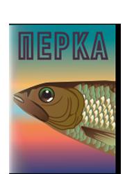 Πέρκα {infographic}
